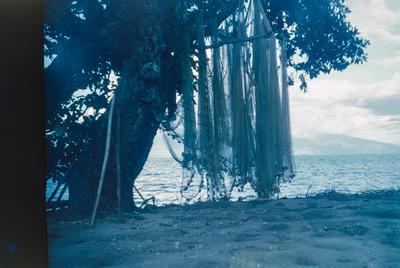 [Fishing nets in a tree on Moorea]