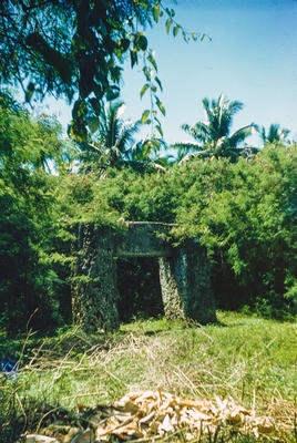 [Trees in a clearing in Tonga]