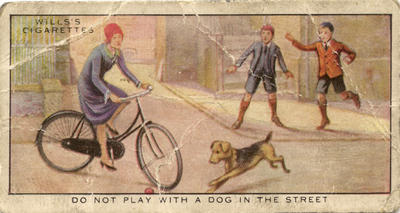 Do not play with a dog in the street