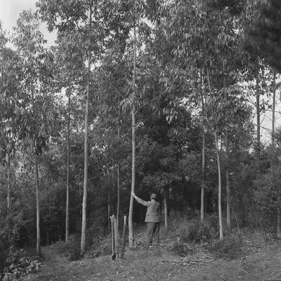 Seedlings and trees 23 July 1958