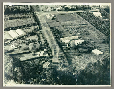 [Copy photograph of Garden property in Otumoetai Road]