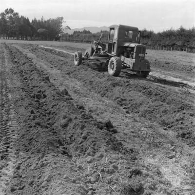Surface drainage, Hauraki plains, April 1963