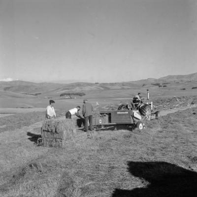 Haymaking, Moa Flat, Central Otago, 1965