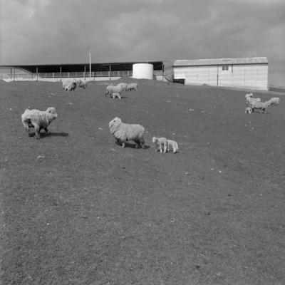 Huntly woolshed, August 1965
