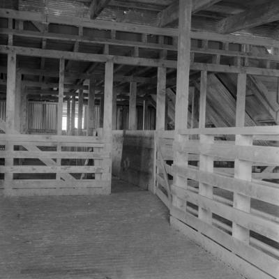 Woolshed, Feb 1966