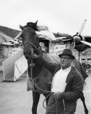 Safe Air Ltd Bristol Freighter loading eace horses and other livestock