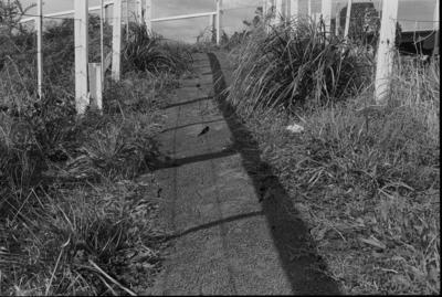 Photograph of path leading to  Swanson station