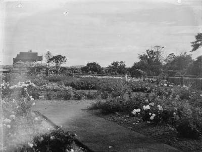 Parnell Rose Gardens