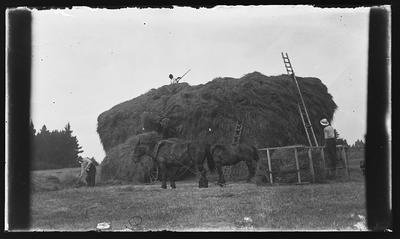 [Glass plate negative horses and hay]