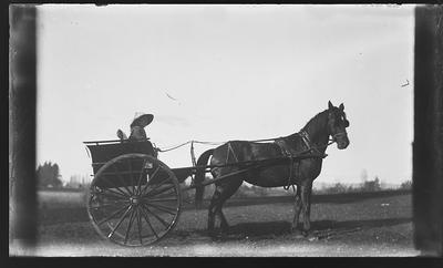 [Glass plate negative horse drawn carriage]