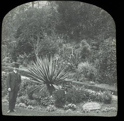 Botanic Gardens Napier