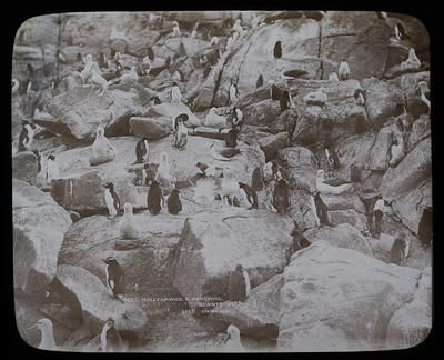 6025 Mollyhawks and Penguins Bounty Isld. 6025