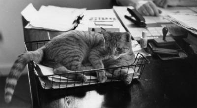 ['Brigadier' MOTAT's cat]